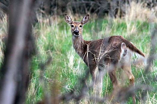 City council passed a bylaw that will allow hunters to use bow and arrows to hunt deer in certain areas of the city.