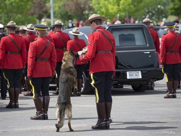 RCMP police dog Danny sniffs the Stetson of his partner, slain Const. David Ross, during the funeral procession for the three RCMP officers who were killed in the line of duty, at their regimental funeral at the Moncton Coliseum in Moncton, N.B. on Tuesday, June 10, 2014.
