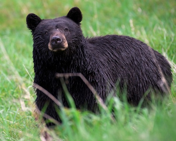 A bear surprised a sleeping man near Sioux Lookout.
