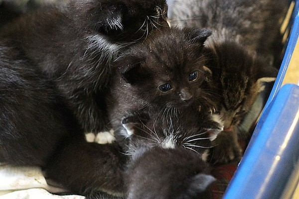 Six two-week-old kittens were found abandoned on the side of Rosslyn Road just minutes from the Thunder Bay District Humane Society late last week.