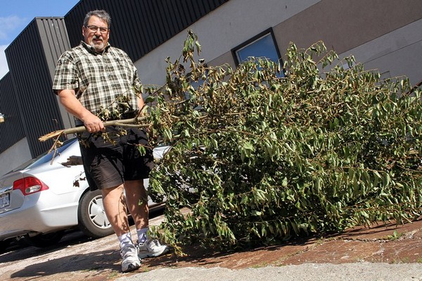 Waterfront District BIA spokesman Jim Comuzzi says he's disappointed vandals over the weekend tore down four trees that lined St. Paul Street.
